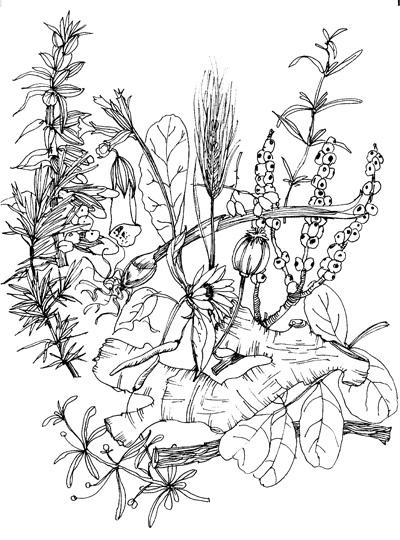 Herbal Montage