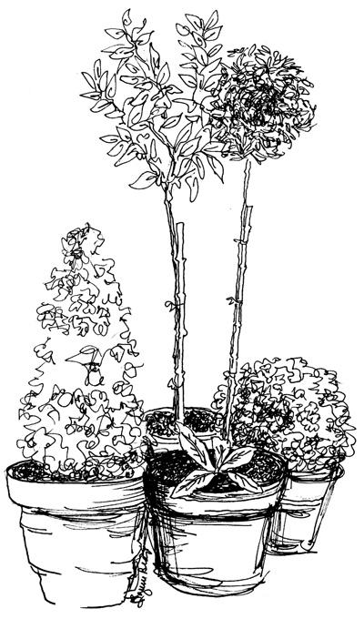 Topiaries in Pots