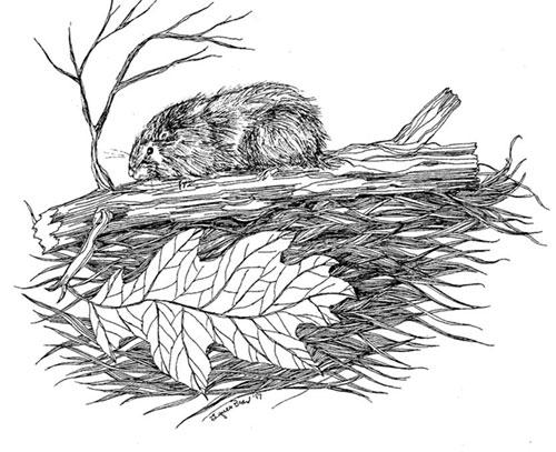 Lynne Beard Design | Illustrations by Lynne Beard