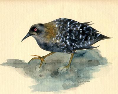 Water Bird drawing by Lynne Beard